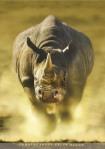 runnin rhino